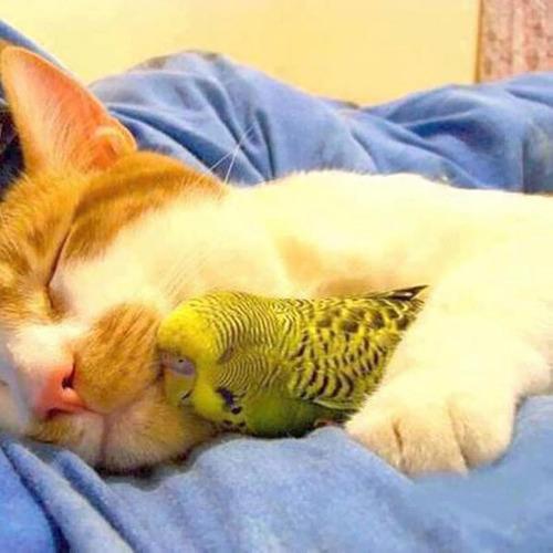癒される,ペット,寝る,画像まとめ018