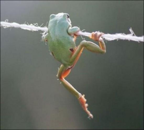 愛らしい,カエル,画像まとめ020