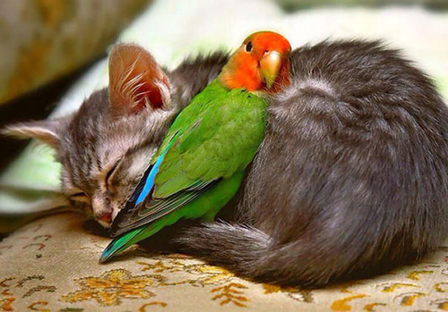 癒される,ペット,寝る,画像まとめ020