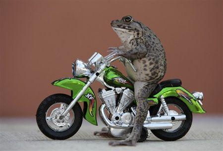 愛らしい,カエル,画像まとめ021