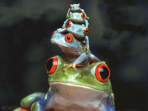 愛らしい,カエル,画像まとめ022