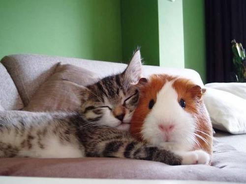 癒される,ペット,寝る,画像まとめ022