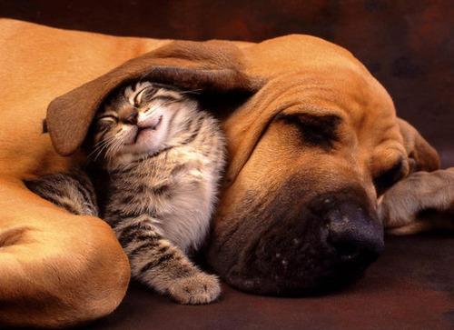 癒される,ペット,寝る,画像まとめ028