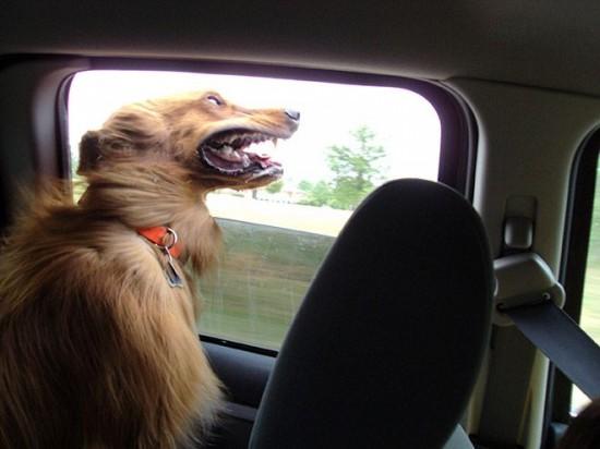 車,犬,画像,まとめ030