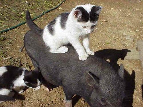 可愛すぎる,動物,二段重ね,画像,まとめ031