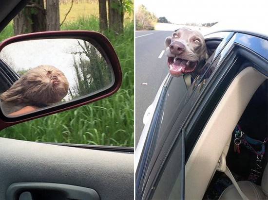 車,犬,画像,まとめ032