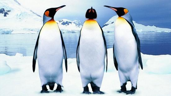 キュート,かわいい,ペンギン,画像,まとめ035