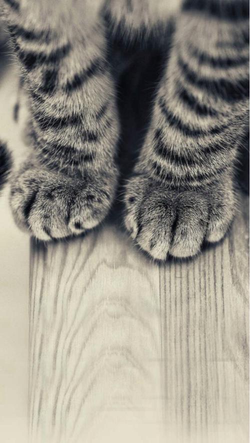 センスのいい,可愛い,猫,写真,まとめ037