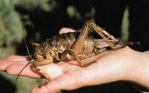 これはすごい,大きすぎ,動物,昆虫,画像,まとめ042