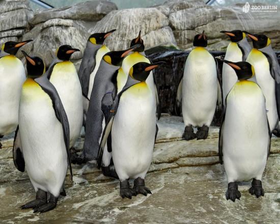 キュート,かわいい,ペンギン,画像,まとめ042