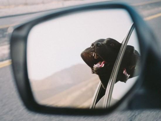 車,犬,画像,まとめ042