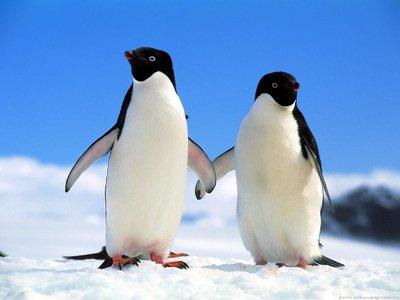キュート,かわいい,ペンギン,画像,まとめ051