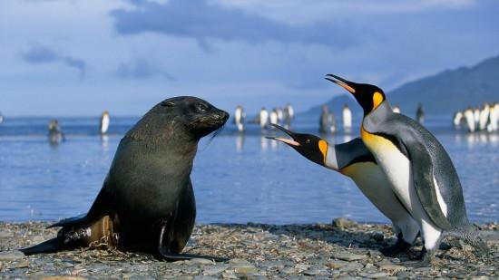 キュート,かわいい,ペンギン,画像,まとめ060