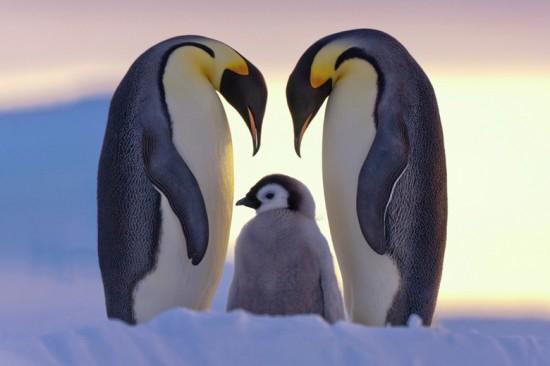 キュート,かわいい,ペンギン,画像,まとめ066