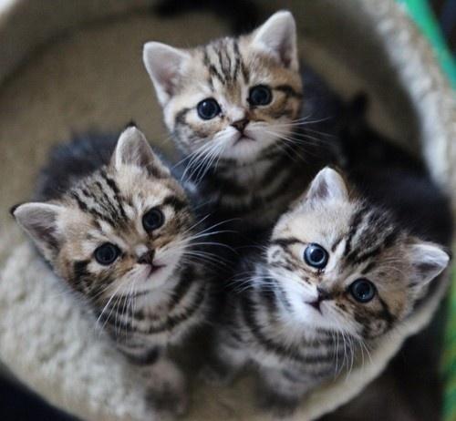 センスのいい,可愛い,猫,写真,まとめ071