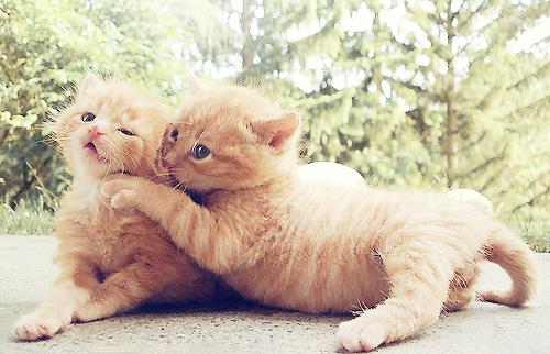 センスのいい,可愛い,猫,写真,まとめ092