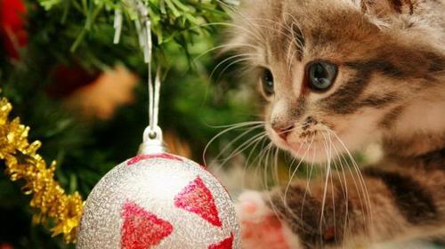 オシャレ,可愛い,クリスマス,画像,まとめ113