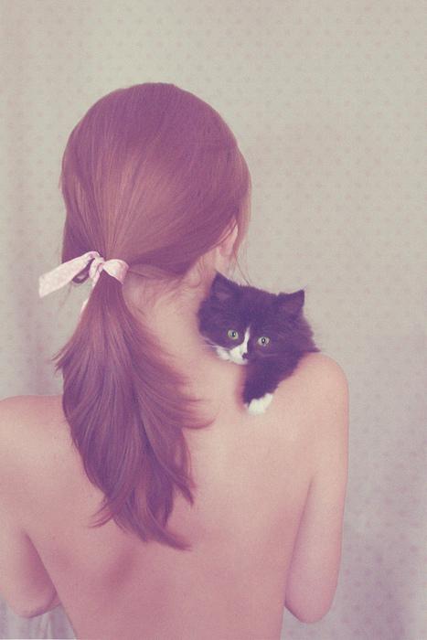 センスのいい,可愛い,猫,写真,まとめ237