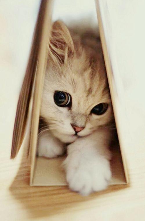 センスのいい,可愛い,猫,写真,まとめ240
