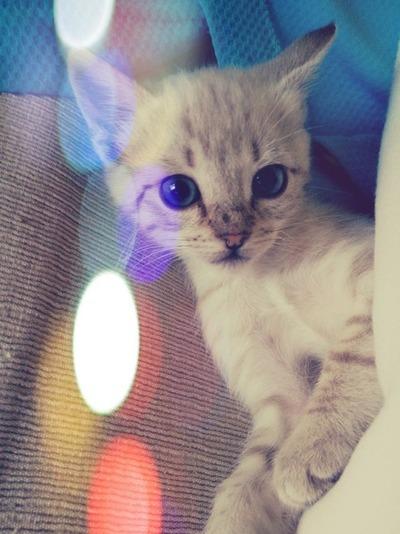 センスのいい,可愛い,猫,写真,まとめ334