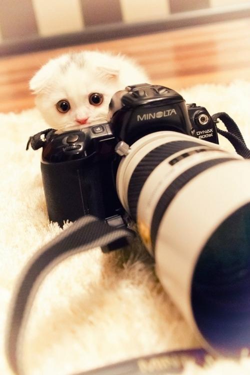 センスのいい,可愛い,猫,写真,まとめ351
