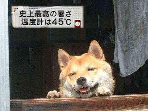 新年,初笑い,動物,おもしろ,ネタ画像,まとめ001