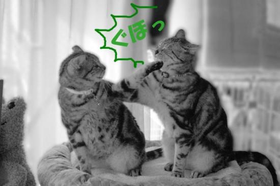 破壊力抜群,必殺,猫パンチ,画像,まとめ001