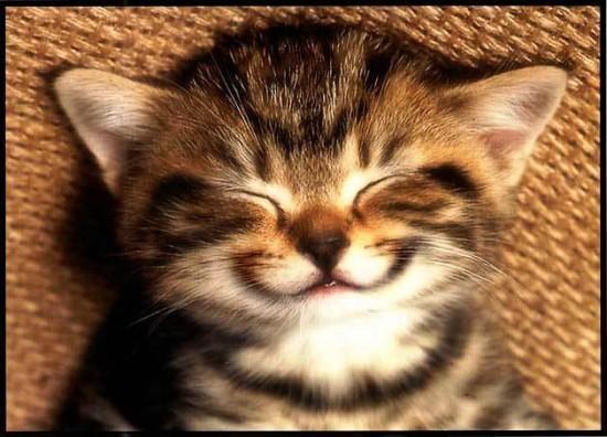 笑顔,動物,笑い顔,画像,まとめ003