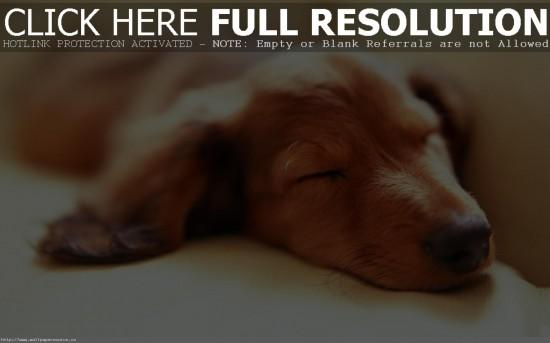 スヤー,おねむ,動物,寝顔,画像,まとめ003