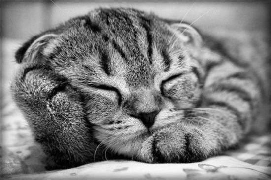癒されすぎ,ヤバイ,動物,寝顔,画像,まとめ006