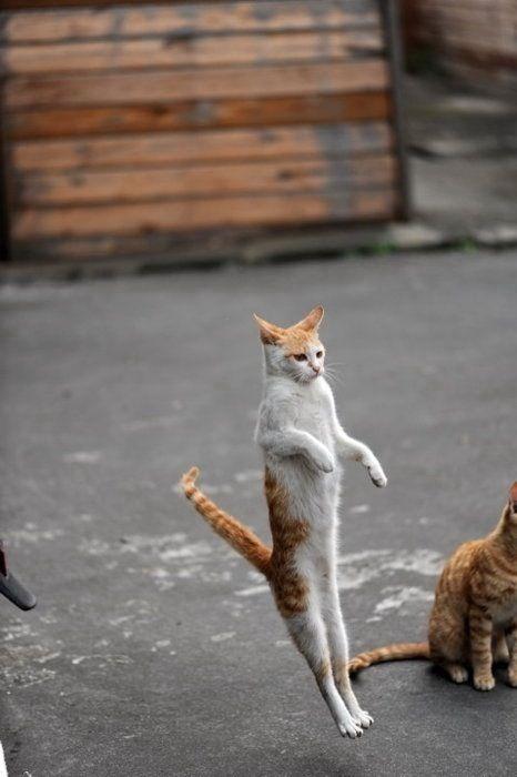 可愛すぎ,動物,ネタ,面白画像,まとめ007