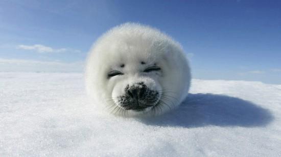 笑顔,動物,笑い顔,画像,まとめ007