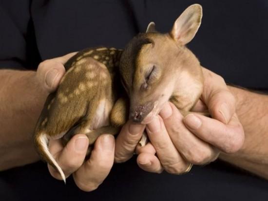 可愛すぎ,ヤバイ,赤ちゃん,動物,画像,まとめ008