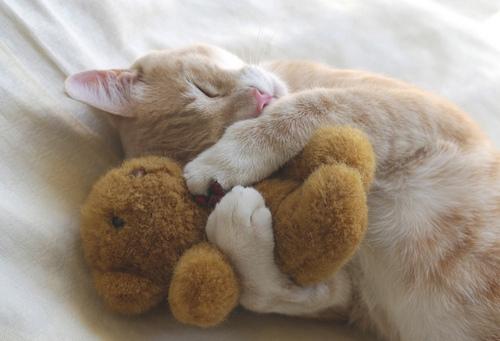ぬいぐるみ,大好き,猫ちゃん,画像,まとめ010