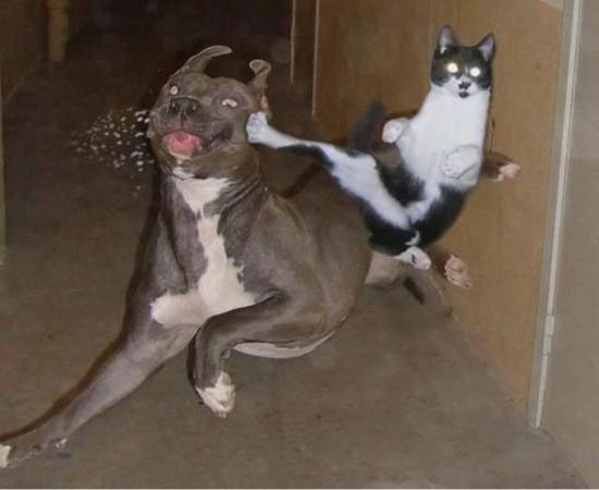 破壊力抜群,必殺,猫パンチ,画像,まとめ010