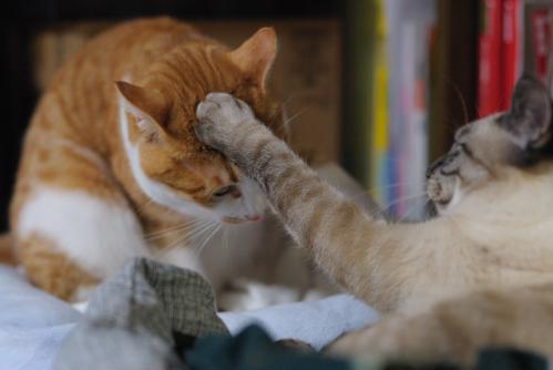 破壊力抜群,必殺,猫パンチ,画像,まとめ011