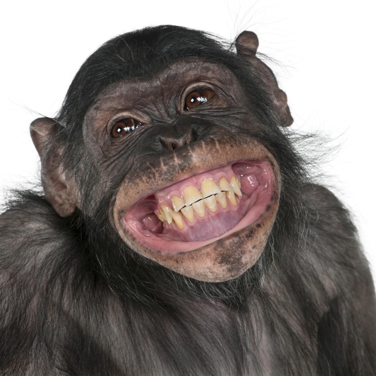 笑顔,動物,笑い顔,画像,まとめ011