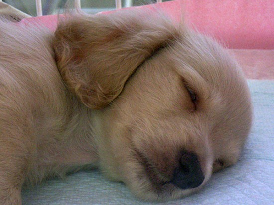 可愛い,動物,寝顔,画像,まとめ012