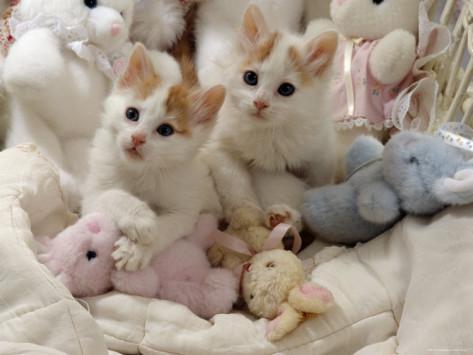 ぬいぐるみ,大好き,猫ちゃん,画像,まとめ012
