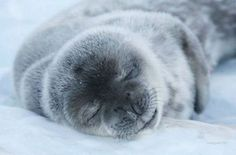 スヤー,おねむ,動物,寝顔,画像,まとめ012