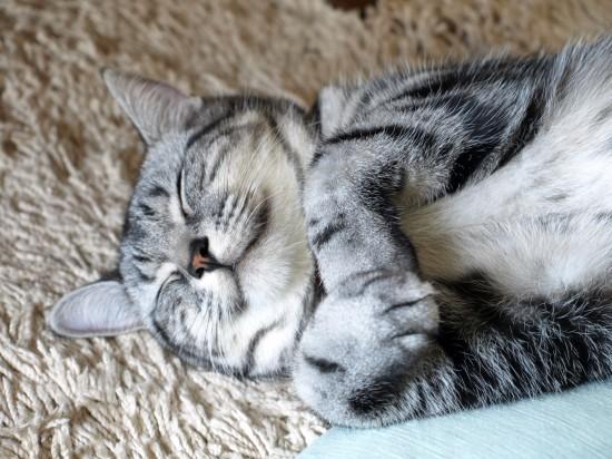 可愛い,動物,寝顔,画像,まとめ013