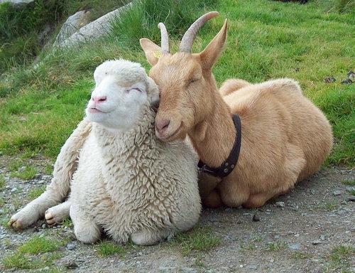 可愛い,癒されすぎる,動物,画像,まとめ013