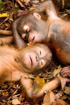 スヤー,おねむ,動物,寝顔,画像,まとめ013