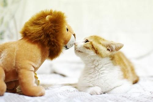 ぬいぐるみ,大好き,猫ちゃん,画像,まとめ014