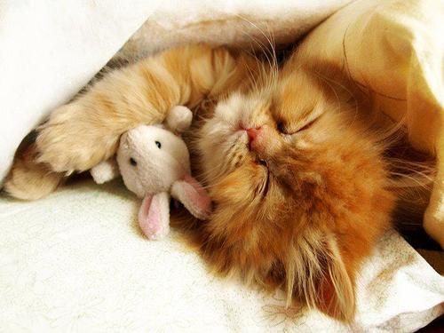 ぬいぐるみ,大好き,猫ちゃん,画像,まとめ015