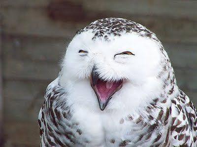笑顔,動物,笑い顔,画像,まとめ015