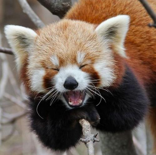 笑顔,動物,癒し,画像,まとめ016