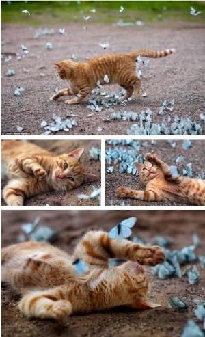 可愛すぎ,ヤバイ,猫,画像,まとめ019