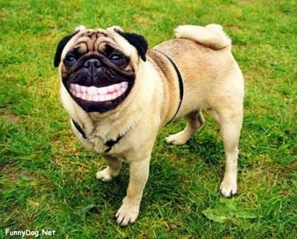 笑顔,動物,笑い顔,画像,まとめ019