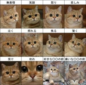 可愛すぎ,ヤバイ,猫,画像,まとめ020